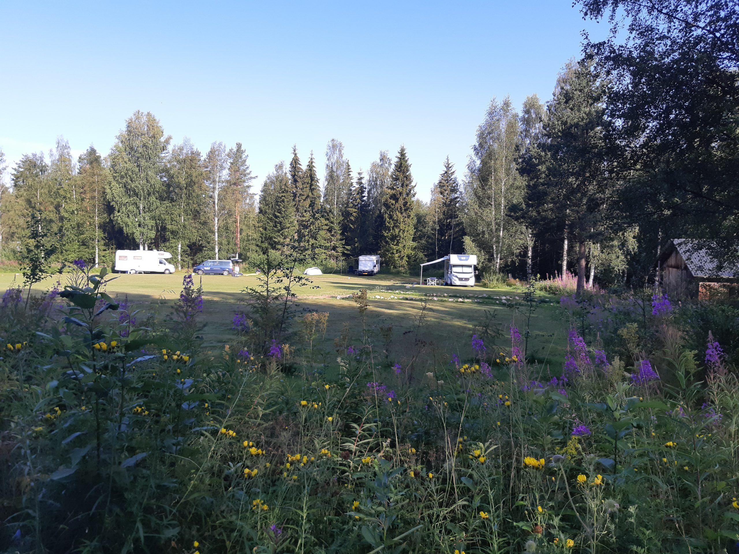 Wildlifesweden camping site
